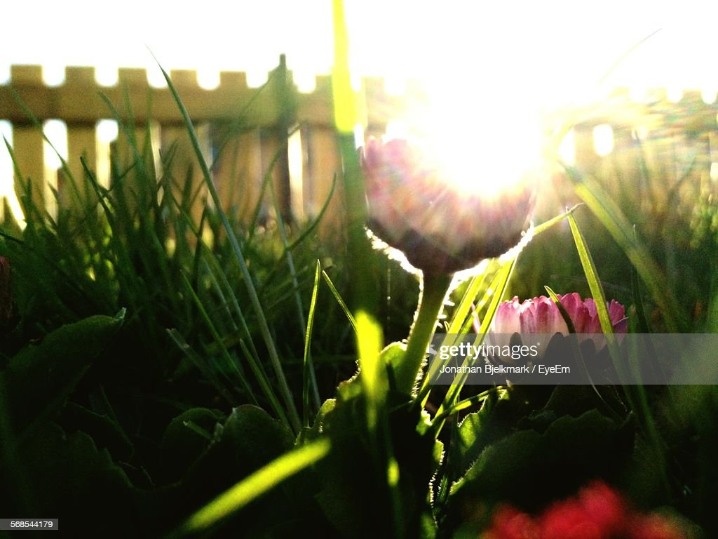 Flowers Growing At Park On Sunny Day : Stock Photo