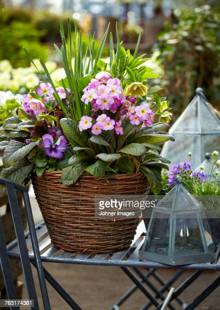 Flowers growing in basket