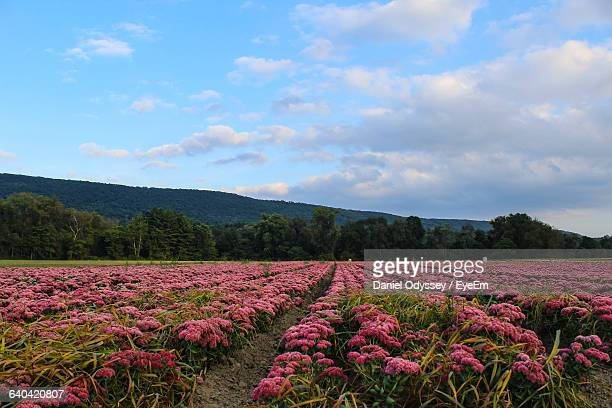 flowers growing in field - worcester massachusetts stock pictures, royalty-free photos & images