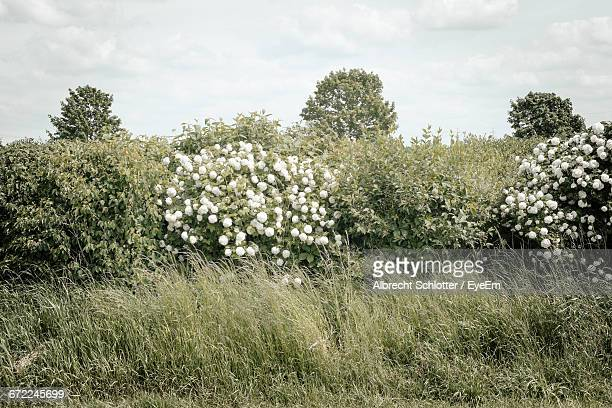 flowers growing in field - albrecht schlotter stock photos and pictures