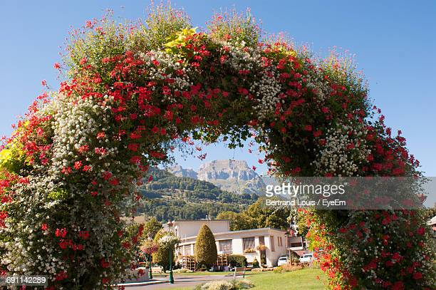 flowers growing in garden - boog architectonisch element stockfoto's en -beelden