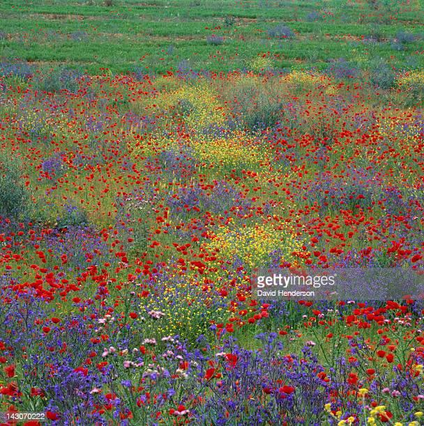 Flowers growing in rural pasture