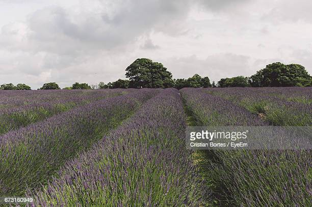 flowers growing in the field - bortes cristian stock photos and pictures