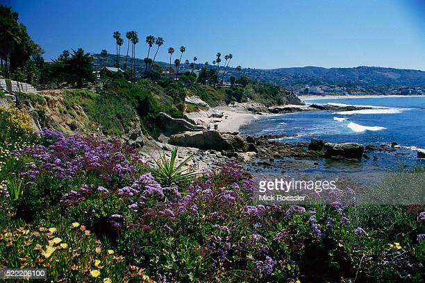Flowers Growing on Bluffs over Beach