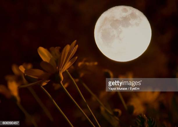 Flowers Growing On Field Against Sky With Full Moon