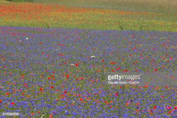 flowers growing on field - giusti claudia stock pictures, royalty-free photos & images