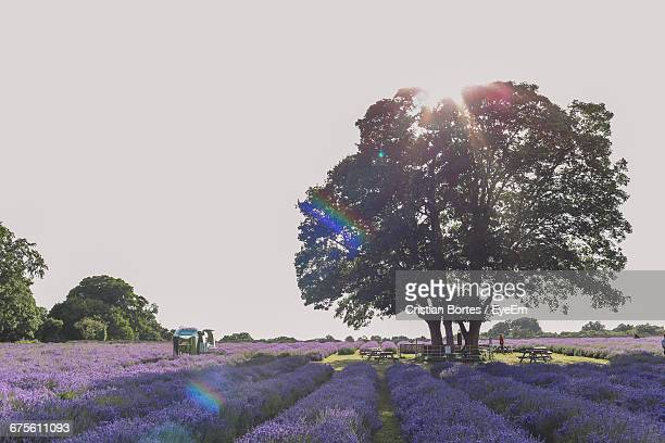 flowers growing on landscape - bortes cristian stock photos and pictures