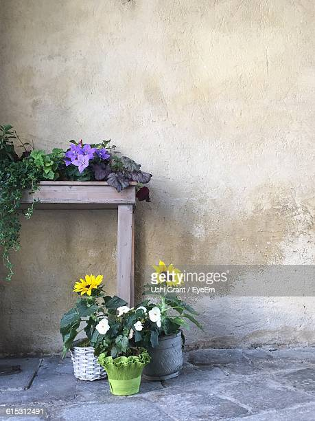 Flowers Growing On Potted Plants By Table Against Wall