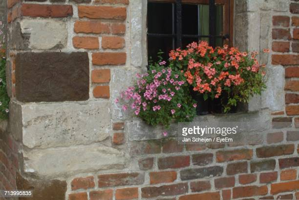 Flowers Growing Outside House