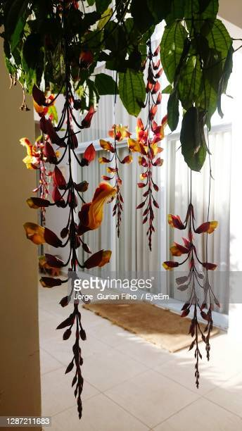 flowers hanging on tree - filho stock pictures, royalty-free photos & images