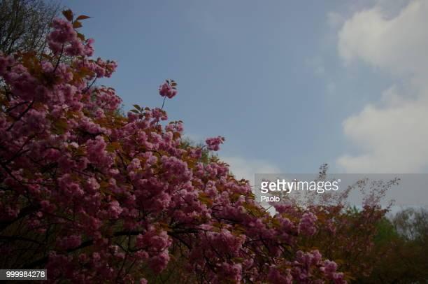 Flowers hasselt