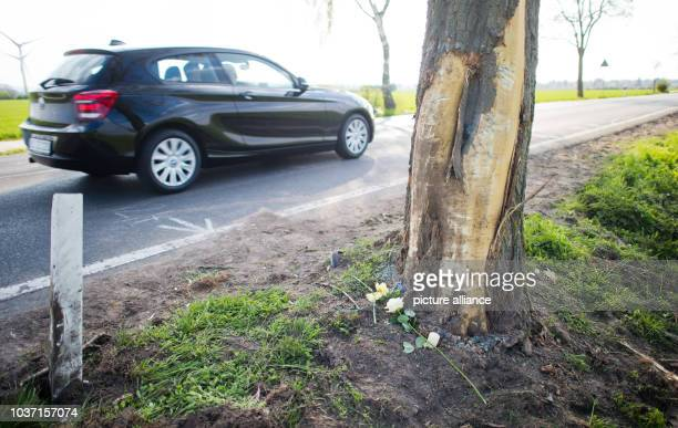 Flowers have been placed at a tree next to a road between Hiddestorf and Pattensen Germany 01 May 2016 Five young adults crashed their car against a...