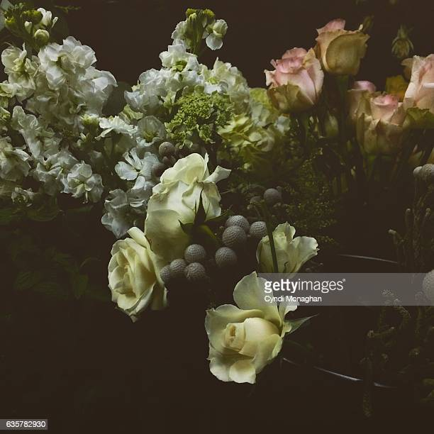 flowers illuminated - moody sky stock pictures, royalty-free photos & images