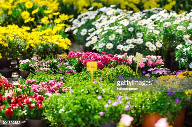 flowers in a garden outlet