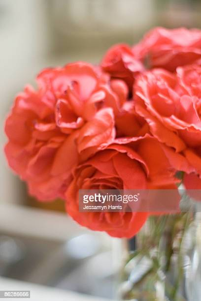 flowers in a vase - jessamyn harris stock pictures, royalty-free photos & images