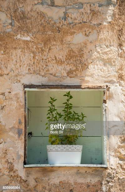 Flowers in alcove, Limassol, Cyprus