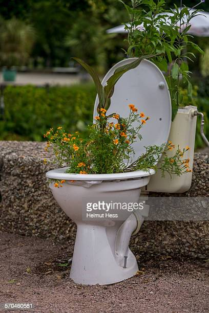 flowers in an toilet bowl - toilet bowl stock photos and pictures