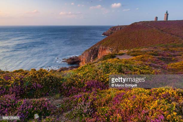 flowers in bloom over the cliffs at cap frehel. brittany, france. - bretagne photos et images de collection
