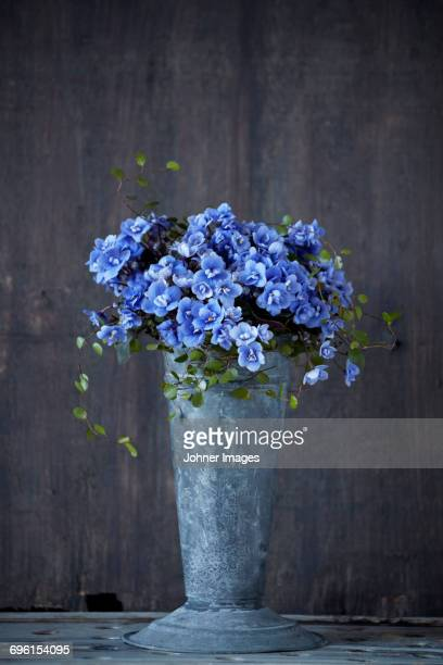 flowers in bucket - african violet stock photos and pictures