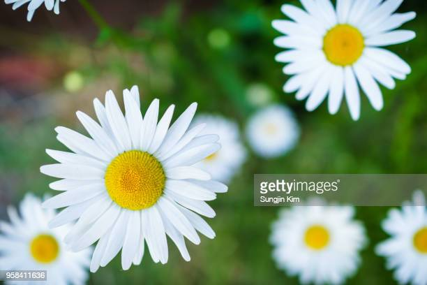 flowers in close-up - sungjin kim stock pictures, royalty-free photos & images