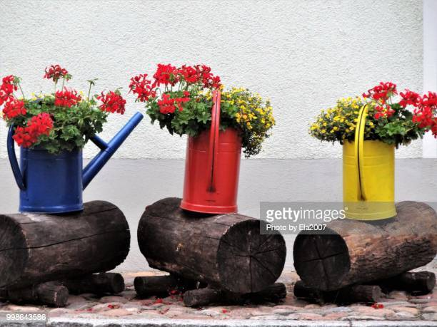 Flowers in colorful watering cans