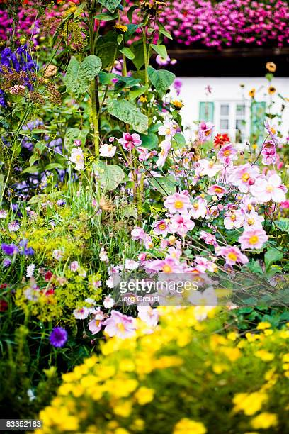 Flowers in cottage garden