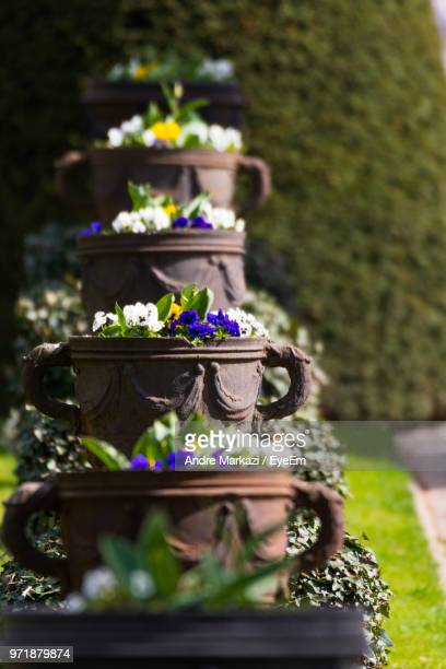 Flowers In Decorative Urns At Park