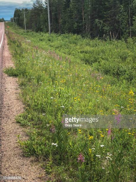flowers in finland ditch - straßenrand stock-fotos und bilder