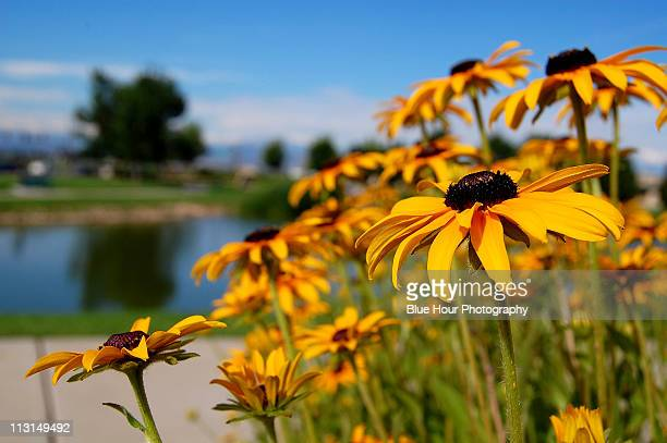 Flowers in Fort Collins, Colorado