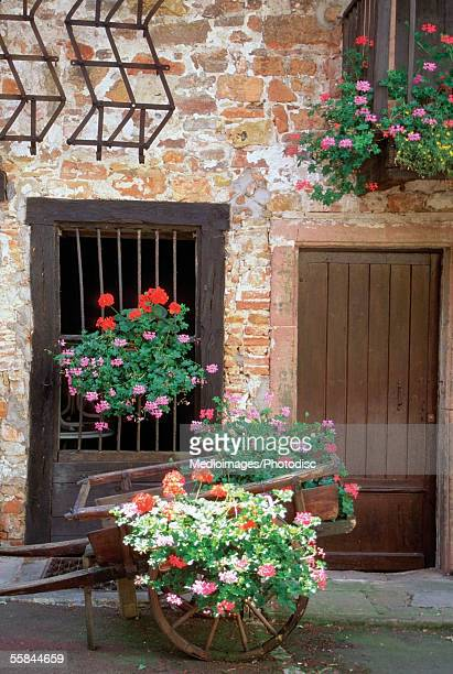 Flowers in front of barred window, Colmar, Alsace, France