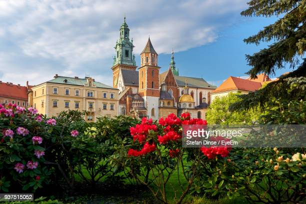 flowers in front of building - krakow stock pictures, royalty-free photos & images
