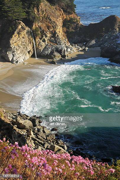 flowers in front of mcway falls - mcway falls stock pictures, royalty-free photos & images