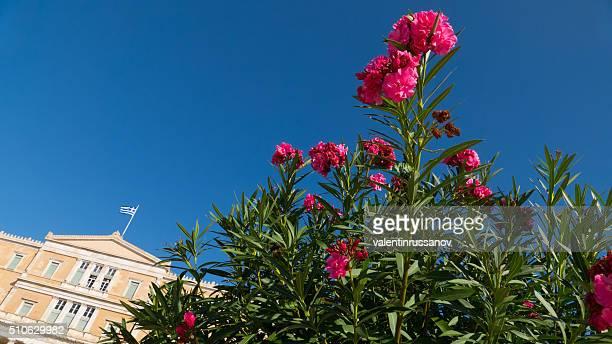 花のの前旧王宮、アテネ(ギリシャ) - ギリシャ国会議事堂 ストックフォトと画像