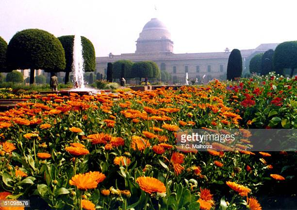 Flowers In Full Bloom At The Mughal Garden Of The President House In New Delhi On February 171999 The President House Is Opening To The Public For...