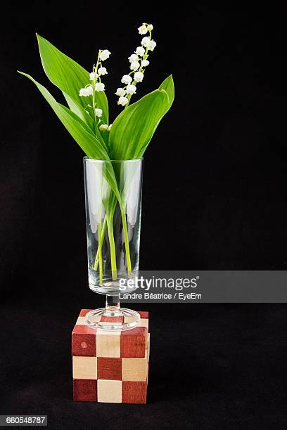 Flowers In Glass Puzzle Cube Against Black Background