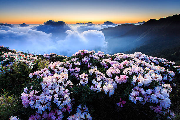Flowers in high mountains