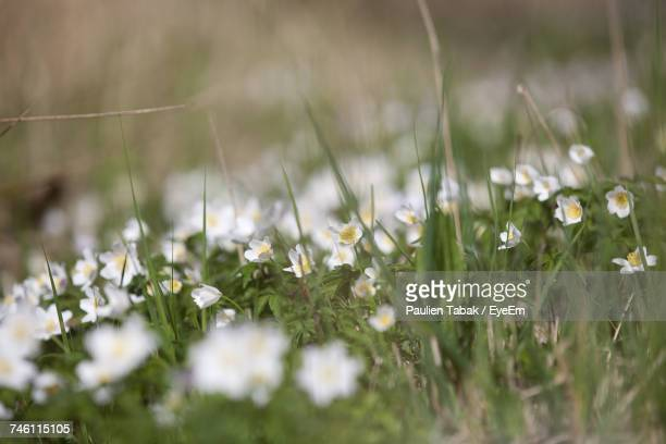 flowers in meadow - paulien tabak stock pictures, royalty-free photos & images