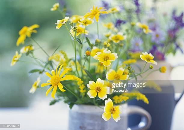 1 321 Pitchers Of Flowers Photos And Premium High Res Pictures Getty Images