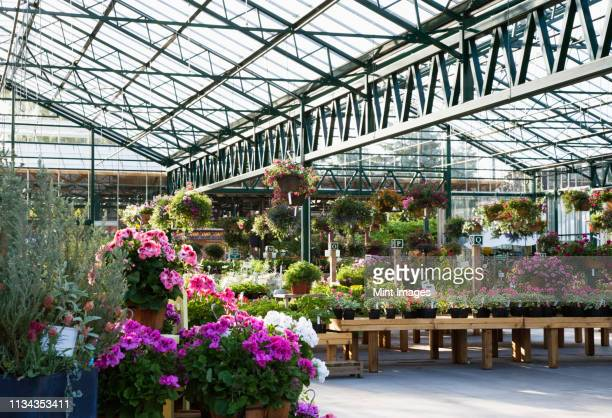 flowers in plant nursery - 植物園 ストックフォトと画像