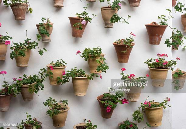Flowers in plant pots in the Palace of Viana in Cordoba, Andalucia, Spain