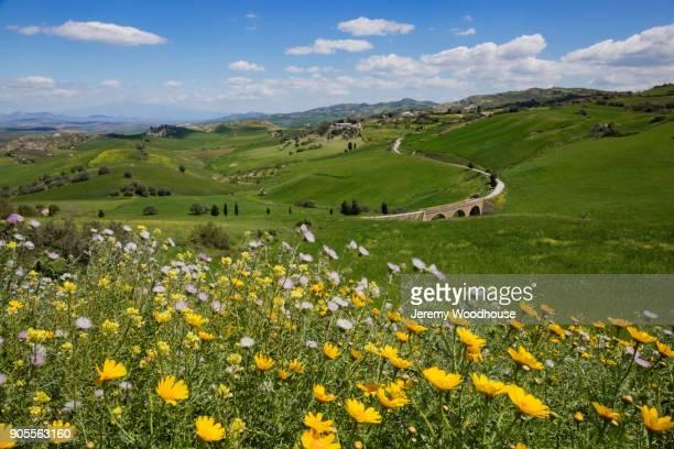 flowers in rural landscape - paesaggio collinare foto e immagini stock