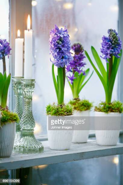 Flowers in small pots