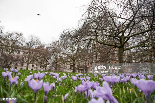 Flowers in St James's Park  of London with the cityscape.
