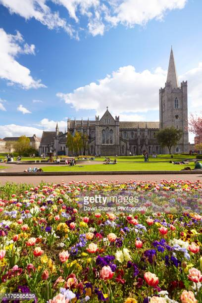 flowers in st. patrick's park and st. patrick's cathedral in dublin city, ireland - david soanes stock pictures, royalty-free photos & images