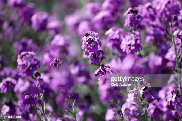 Flowers in the Evolution Garden are seen during lockdown at The Royal Botanic Gardens at Kew at Kew on May 20 2020 in Richmond England The gardens...