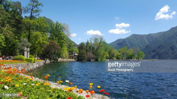 flowers in the gardens of ciani park, along the waterfront of lake lugano, a glacial lake on the border between southern switzerland and northern italy - riva del lago foto e immagini stock