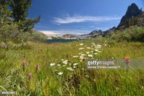 Flowers in the meadow below jagged peaks