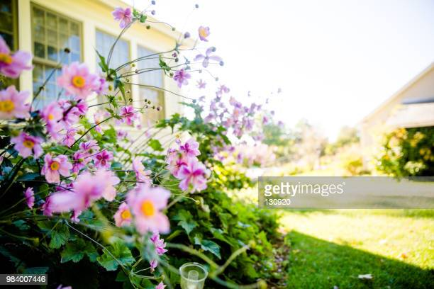 flowers in the yard - flowerbed stock pictures, royalty-free photos & images