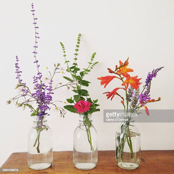 Flowers in vases with white background