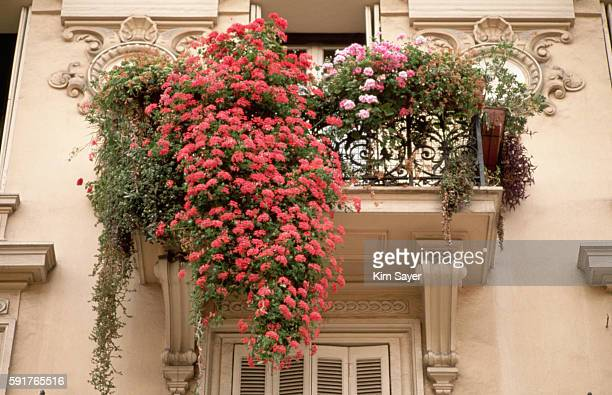 flowers in window boxes - geranium stock pictures, royalty-free photos & images